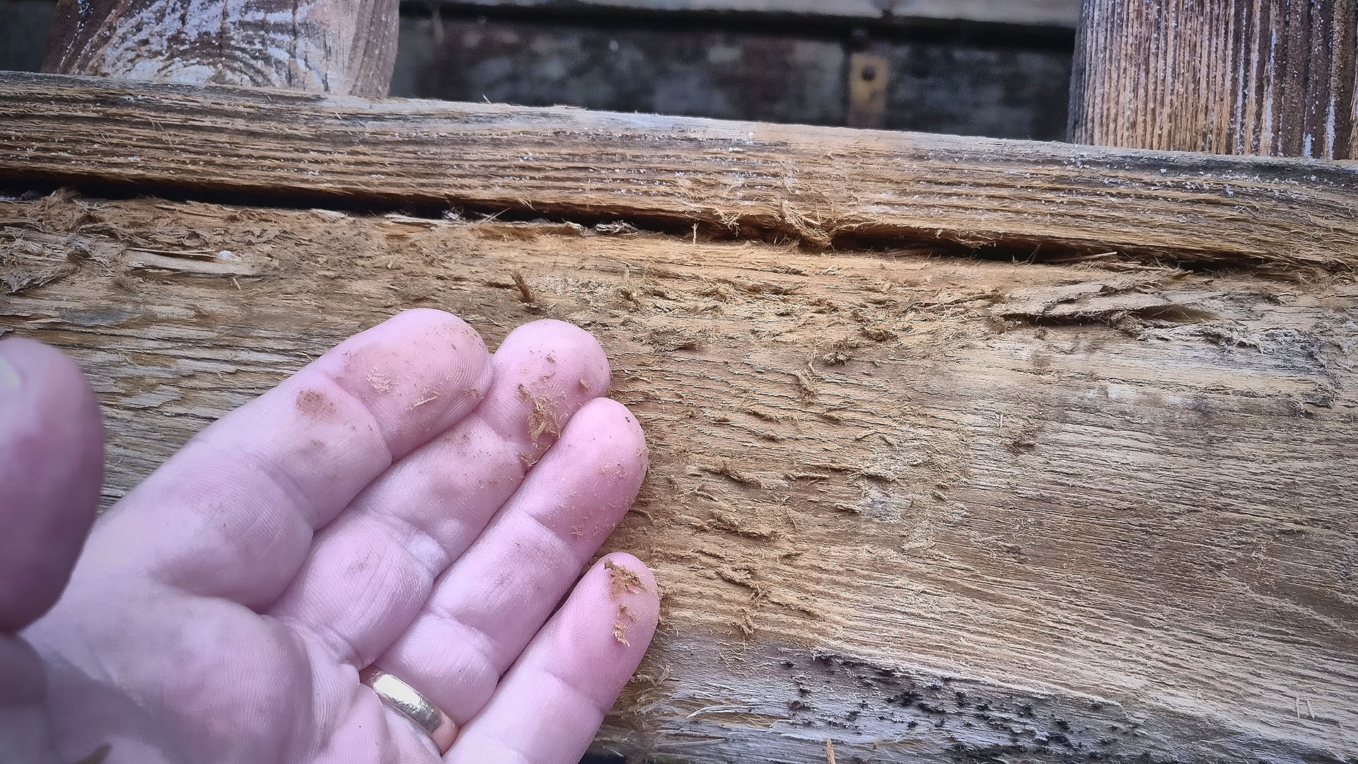 Mazeration (Holzkorrosion)